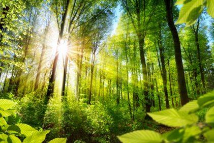 Waldtherapie: Wie wir im Wald gesund werden